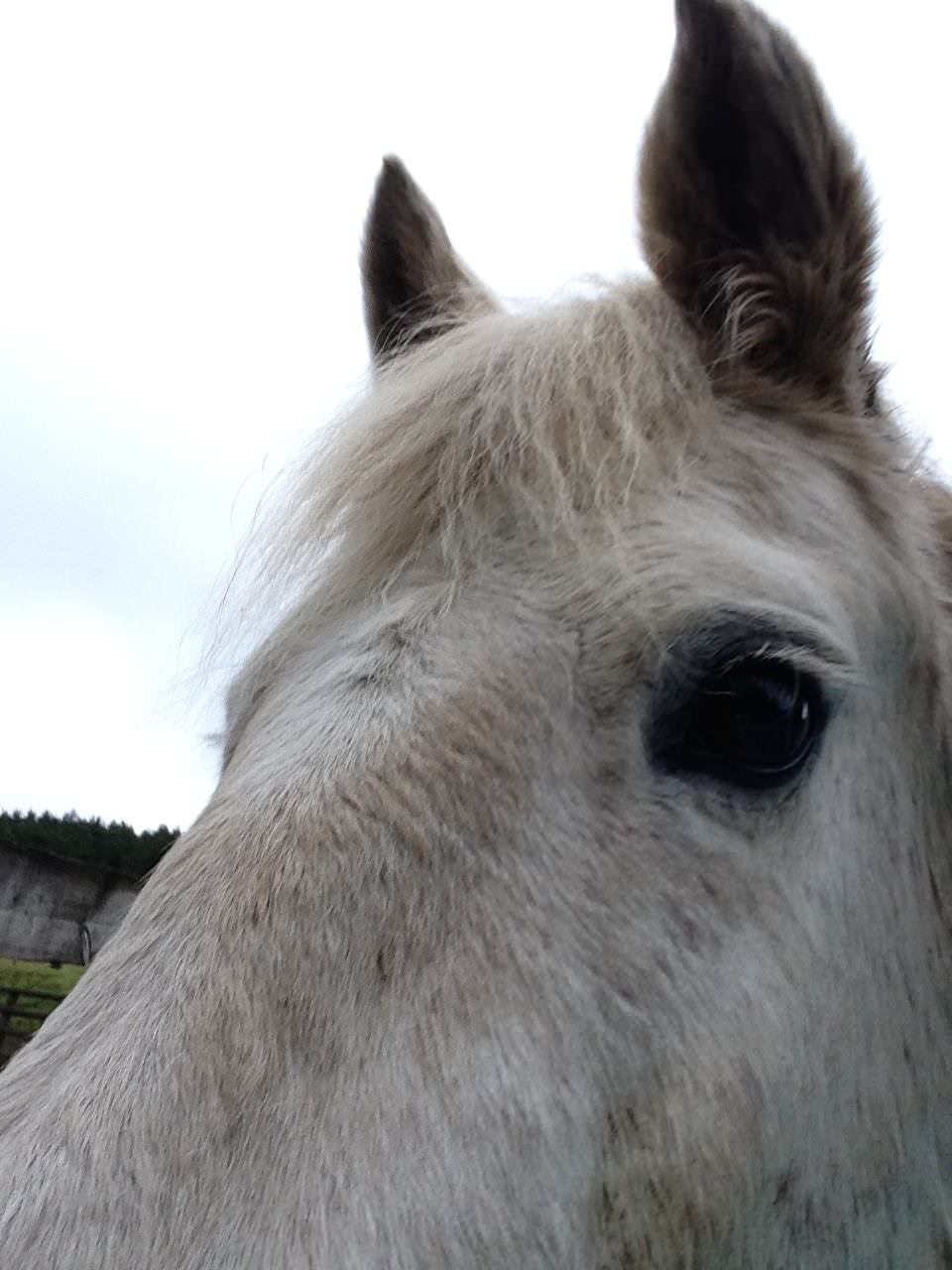 Even Horses Like EMMETT Technique in Shropshire