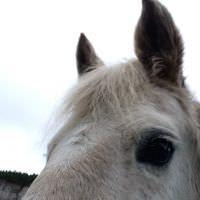 Even Horses Like EMMETT Technique in Shropshire