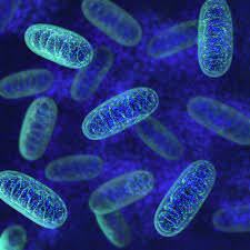 Tired of Being Tired? Mitochondrial Therapy in Shrewsbury